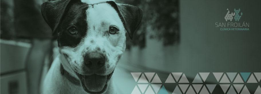 banner-web-veterinaria